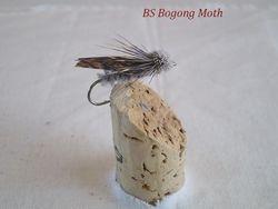 Bogong Moth RF