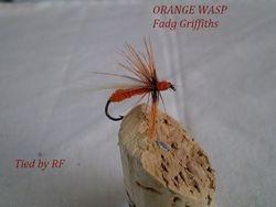 Orange Wasp Fadgth Griffiths