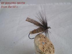 Bogong Moth Rf 60s