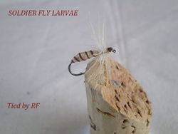 Soldier Fly Larvae F Griffiths