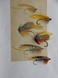 Ephemera Collection (Illustrated Flies) The flies shown with the 5 pages of illustrations