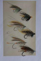 Ephemera Collection