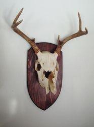 Deer Head Plaque