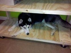 Shelves Added (My Dog Loves Them)
