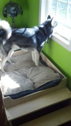 Pallet Wood Dog Bed