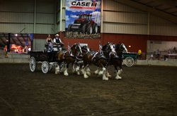 4-UP Mare- National Show