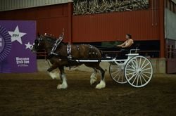Mare Cart- Molly National Show