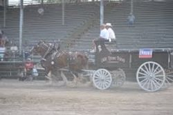 2010 Wood County Fair