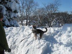 Snowfall 2-9-10