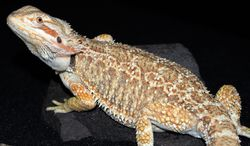 this is my new female i havent named her yet!