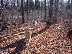 Kipling & Tripper Nov 2009