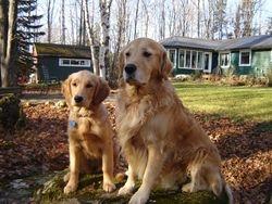 Tripper & Kipling Fall 2009