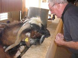 Old goat...xx