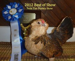 2012 Best of Show -  Twin Tier Show -hen