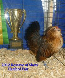 2012 Res. of Show  Harford Fair  -pullet