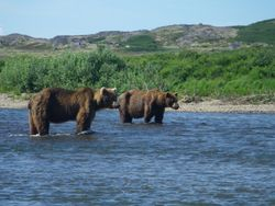 "A couple other ""anglers"" on Moraine, Creek, AK"