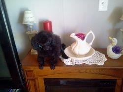 Black teacup just sold Prissy