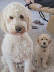 Seddy & Oakley