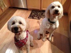 Oakley & Seddy