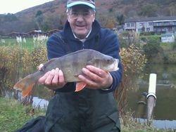 3lb perch caught 7th nov match lake