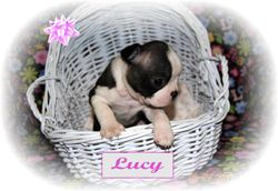 Lucy - 4 weeks old