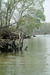 Sassafras river hotspot