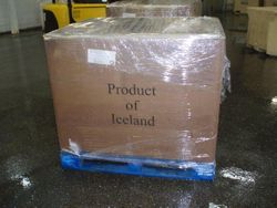 LUMPFISH ICELAND