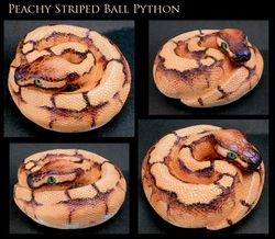 Peachy Striped Python