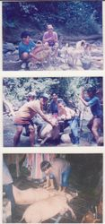 Nostalgia Hunting