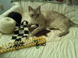 Knittin' kitten (Jeanne's Bruce)