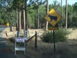 Ferretti Road Closed at the Ranger Station
