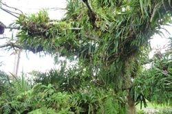 Epiphytes in tree