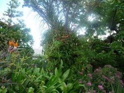 Epiphyte clump