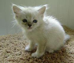 Baby Hermes