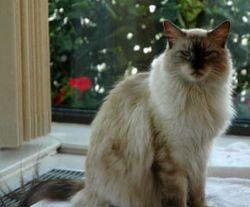 QuickSilver as Christmas Cat