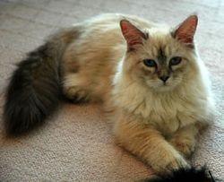 Tinkerbella -- one year old
