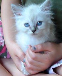 Tinkerbella -- 12 weeks old