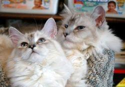 Tinkerbella and Hermes