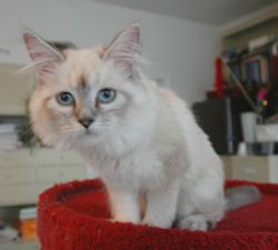 Tinkerbella -- six months old