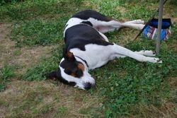 Dr. Elizabeth Uhl, Chris' daughter from Americus, GA, brought her dog, Sadie
