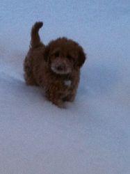 Snow Doodle!