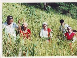 A Tanchangya family harvesting hill-top (jhum) paddy cultivation