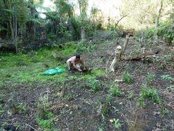 Abdul planting