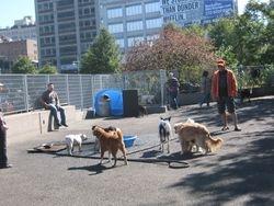 Dog park pics