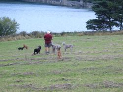 Clive ( friend) with his Weimaraners and mine above reservoirs at Chesterfield
