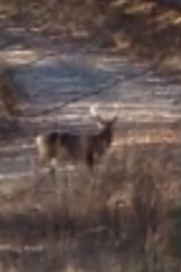 Young 8 pt crossing