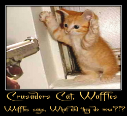 Crusader`s Cat, Waffles.