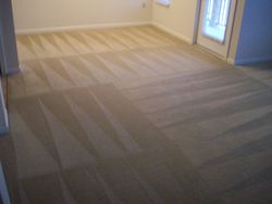 Family & Pet Safe Carpet Cleaning