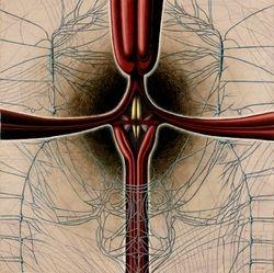 Medulla Oblongata and the Sympathetic Nerve