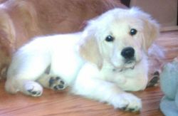 Toby was an adorable puppy! :)
